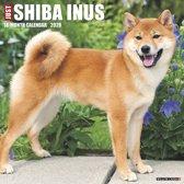 Just Shiba Inus 2020 Wall Calendar (Dog Breed Calendar)