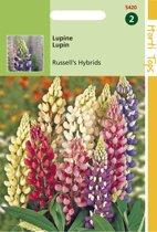 Hortitops Zaden - Lupinus Polyphyllus Russell'S Hybr. Gemengd