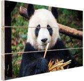 Panda die bamboe eet Hout 120x80 cm - Foto print op Hout (Wanddecoratie)