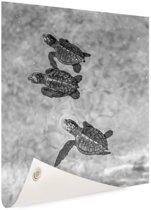 Schildpadden zwart-wit foto Tuinposter 100x200 cm - Tuindoek / Buitencanvas / Schilderijen voor buiten (tuin decoratie) XXL / Groot formaat!