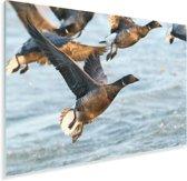 Vliegende rotganzen met de zee op de achtergrond Plexiglas 90x60 cm - Foto print op Glas (Plexiglas wanddecoratie)