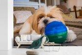 Fotobehang vinyl - Een Shih Tzu hond is aan het het spelen met een bal breedte 450 cm x hoogte 300 cm - Foto print op behang (in 7 formaten beschikbaar)