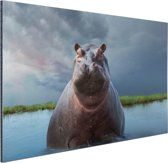 FotoCadeau.nl - Nijlpaard in het water Aluminium 90x60 cm - Foto print op Aluminium (metaal wanddecoratie)