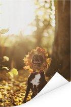 Staffordshire Bull Terrier tussen de herfstbladeren Poster 80x120 cm - Foto print op Poster (wanddecoratie woonkamer / slaapkamer) / Huisdieren Poster
