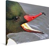 De grote zaagbek met een indrukwekkende open bek Canvas 90x60 cm - Foto print op Canvas schilderij (Wanddecoratie woonkamer / slaapkamer)