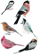 KEK Amsterdam Muurstickers set vogels