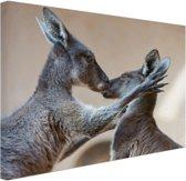 FotoCadeau.nl - Twee kangoeroes kussen met elkaar Canvas 30x20 cm - Foto print op Canvas schilderij (Wanddecoratie)
