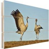Twee Europese kraanvogels op de grond Vurenhout met planken 90x60 cm - Foto print op Hout (Wanddecoratie)