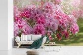 Fotobehang vinyl - Zomerse kleuren van de hortensia breedte 600 cm x hoogte 400 cm - Foto print op behang (in 7 formaten beschikbaar)