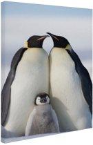 FotoCadeau.nl - Pinguingezin  Canvas 60x80 cm - Foto print op Canvas schilderij (Wanddecoratie)