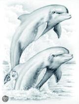 Schetsen op nummer: dolfijnen