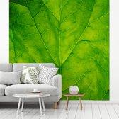 Fotobehang vinyl - Close-up van een lichtgroen spinazie blad breedte 220 cm x hoogte 220 cm - Foto print op behang (in 7 formaten beschikbaar)