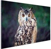 Oehoe uil Aluminium 90x60 cm - Foto print op Aluminium (metaal wanddecoratie)