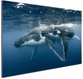 Bultrug moeder en kind zwemmen samen Aluminium 120x80 cm - Foto print op Aluminium (metaal wanddecoratie)