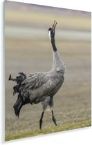 Europese kraanvogel kijkt omhoog in de lucht Plexiglas 60x90 cm - Foto print op Glas (Plexiglas wanddecoratie)