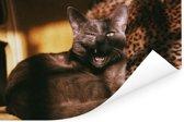 Een gapende Burmese kat in de zon Poster 60x40 cm - Foto print op Poster (wanddecoratie woonkamer / slaapkamer) / Huisdieren Poster
