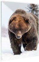 Bruine beer in de sneeuw Glas 40x60 cm - Foto print op Glas (Plexiglas wanddecoratie)