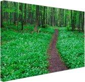 Weg door het groene bos Canvas 60x40 cm - Foto print op Canvas schilderij (Wanddecoratie woonkamer / slaapkamer)