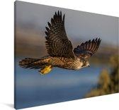 Valk vliegt langs een meer Canvas 90x60 cm - Foto print op Canvas schilderij (Wanddecoratie woonkamer / slaapkamer)