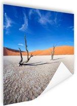 Oude bomen in de woestijn Poster 75x75 cm - Foto print op Poster (wanddecoratie woonkamer / slaapkamer)