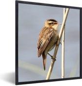Foto in lijst - Close-up foto van een rietzanger fotolijst zwart 40x50 cm - Poster in lijst (Wanddecoratie woonkamer / slaapkamer)