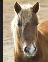 Horse Composition Book