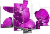 Glasschilderij Orchidee   Paars, Wit   170x100cm 5Luik   Foto print op Glas    F003596