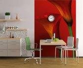 Bloemen Calla - Fotobehang 183 x 254 cm
