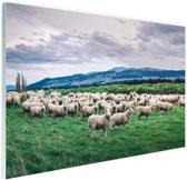 Kudde schapen  Glas 90x60 cm - Foto print op Glas (Plexiglas wanddecoratie)