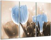 Glasschilderij Tulp | Blauw, Grijs | 120x80cm 3Luik | Foto print op Glas |  F005052