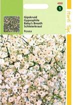 Gipskruid Rosea - Gypsophila elegans - set van 10 stuks