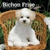 Bichon Frise Puppies 2020 Mini Wall Calendar