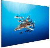 Haai met vissen Aluminium 90x60 cm - Foto print op Aluminium (metaal wanddecoratie)