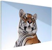 Stoere tijger blauwe lucht Glas 90x60 cm - Foto print op Glas (Plexiglas wanddecoratie)