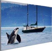 Orka bij een boot Aluminium 120x80 cm - Foto print op Aluminium (metaal wanddecoratie)