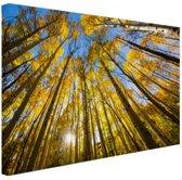 Gele bladeren aan de bomen in het bos Canvas 30x20 cm - Foto print op Canvas schilderij (Wanddecoratie)