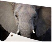 Close-up van olifant Tuinposter 120x80 cm - Tuindoek / Buitencanvas / Schilderijen voor buiten (tuin decoratie)