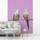 Fotobehang vinyl - Koppel valkparkieten met een roze achtergrond breedte 300 cm x hoogte 400 cm - Foto print op behang (in 7 formaten beschikbaar)