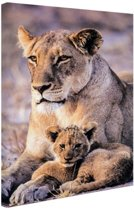 Leeuwin en welp Canvas 60x80 cm - Foto print op Canvas schilderij (Wanddecoratie)