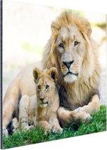 Vader en leeuwenwelp Aluminium 90x60 cm - Foto print op Aluminium (metaal wanddecoratie)