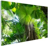 Tropisch regenwoud Glas 180x120 cm - Foto print op Glas (Plexiglas wanddecoratie) XXL / Groot formaat!