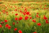 Papermoon Field of Poppies Vlies Fotobehang 400x260cm 8-Banen