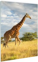 Giraffe bij zonsopgang Glas 20x30 cm - Foto print op Glas (Plexiglas wanddecoratie)