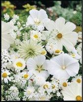 Veldbloemen Witte tinten 100 gram