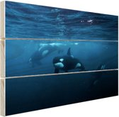 Orkas onder water Hout 60x40 cm - Foto print op Hout (Wanddecoratie)