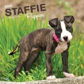 Staffordshire Bull Terrier Puppies 2020 Square Wall Calendar