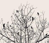Vogeltjes in Boom Fotobehang XXL - 368 x 254 cm - Zwart/Wit