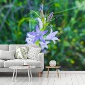 Fotobehang vinyl - Een repelsteeltje in bloei breedte 600 cm x hoogte 500 cm - Foto print op behang (in 7 formaten beschikbaar)