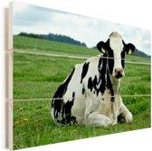 Rustende Friese koe op een groen weiland Vurenhout met planken 90x60 cm - Foto print op Hout (Wanddecoratie)