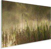 Moeras in het Nationaal park Forillon in Canada Plexiglas 90x60 cm - Foto print op Glas (Plexiglas wanddecoratie)